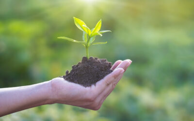 Green recovery: reboot and re-boost our economies for a sustainable future